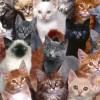 Czy istnieje koci język ?