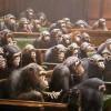o co bym zapytał kandydatów do europarlamentu ?