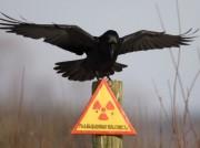 28 lat koszmaru Czernobyla