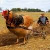 Zmiany dotyczące wszystkich rolników to jest 40% obywateli